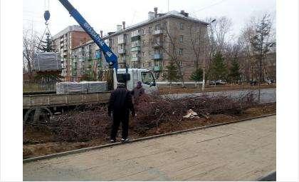Ул. Ленина в Бердске сейчас изрядно облысела - там вырублено 240 деревьев