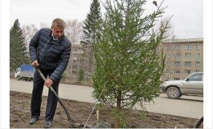 Посадил свое именное дерево и.о. мэра Бердска Андрей Михайлов