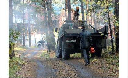 В лесу Бердска незаконно вырублены 14 вековых сосен