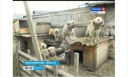 Во дворе частного дома в Бердске живет более 50 собак