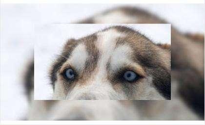 Породистые собаки могут быть арестованы за долги своих хозяев. Фото © vesti.ru