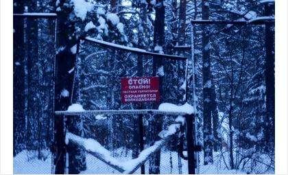 В лесу в том районе, где собаки чуть не до смерти загрызли жителя Новосибирска, есть таблички, предупреждающие о волкодавах. Фото © Игорь Мальков