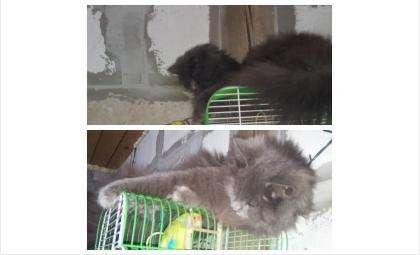 потерялась кошка