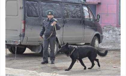 Пес Райс ранее работал в отделе МВД России по Бердску