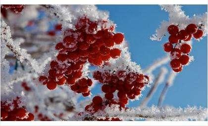 Фото look.com