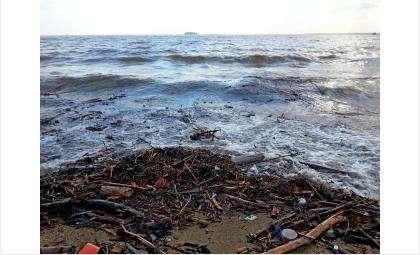 Очистить побережье может каждый
