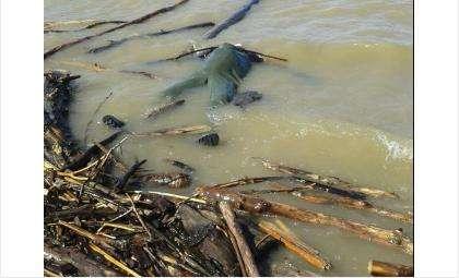 Утонувшего прибило к берегу у пляжа «На камнях»
