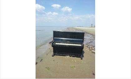 Бердчане! Целое фортепьяно на берегу Обского моря! Может кому надо?