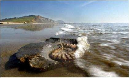 Пляж Юрской эпохи
