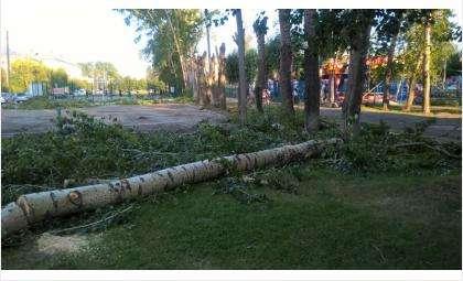 Вырубка деревьев в городском парке Бердска