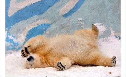 Сегодня медвежонку Ростику исполнилось 11 месяцев. Фото Оксана Цветикова
