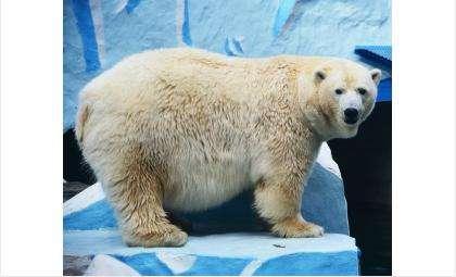Белая медведица Герда. Фото пресс-служба зоопарка