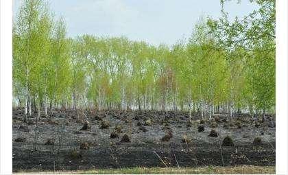 Оценка мэру Бердска - 2 за озеленение