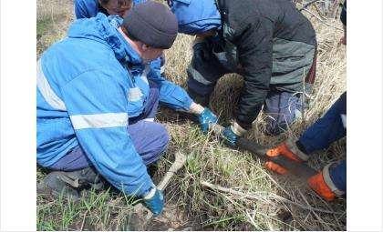 Фото. Двое бердчан и искитимец сливали горючее из нефтепровода в Коченёво