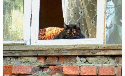 Кошки страдают, теряя хозяев