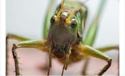У насекомых есть то, что называется «выражение лица»