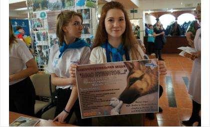 Волонтёры ОДМ продлевают акцию «Дело пушистое»