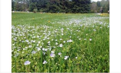 После дождей трава начала расти интенсивнее
