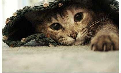 Просто серая кошка – музей Искитима проводит благотворительную акцию для приюта животных