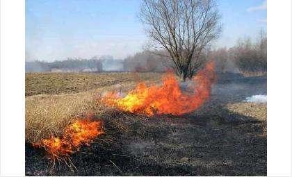 Ухудшилась обстановка с пожарами в Искитимском районе