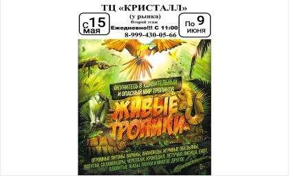 Одна из крупнейших в РФ выставкатропическихживотных открылась в Бердске