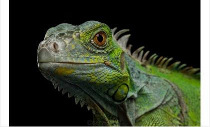 В Бердске открылась одна из крупнейших в РФ выставка тропических животных