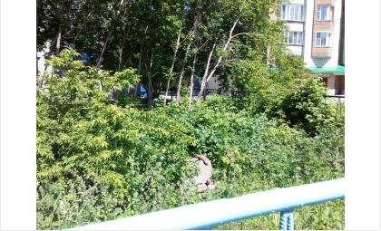 Бомж поселился в заросшей травой аллее за «Ростелекомом» в центре Бердске