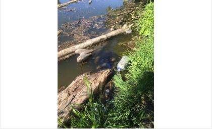 В Бердске в реке Раздельной утонул мужчина