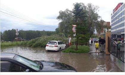 Ул. Попова 11/1 - упало дерево на проезжую часть