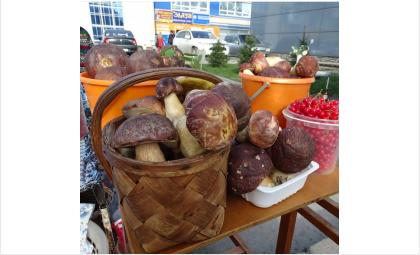 Не покупайте свежие грибы на стихийных рынках