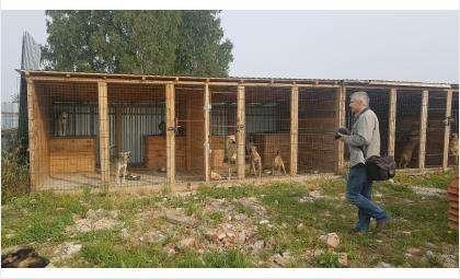 Давайте до зимы поможем приюту построить новые будки для собак и закончить кирпичную кладку!