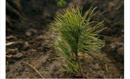 Новосибирская область присоединилась к всероссийской акции «Живи, лес!» по нацпроекту «Экология»