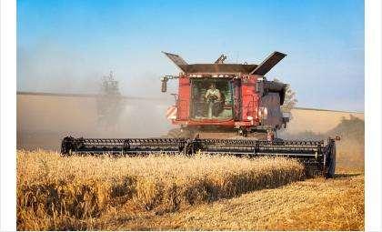 Обмолочено более 98% уборочных площадей зерновых культур
