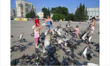 Городские голуби опасны для людей
