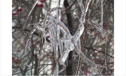 Морозы ожидаются в Бердске