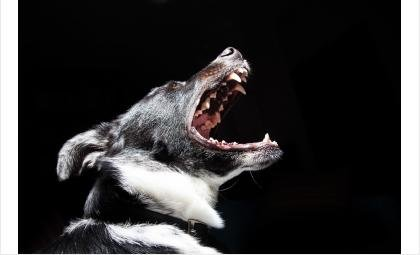 Хозяйка животных привлечена к ответственности за ненадлежащее содержание собак