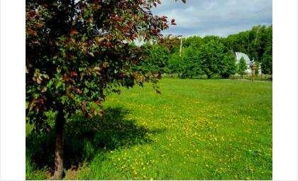 В парке будут новые деревья и газоны