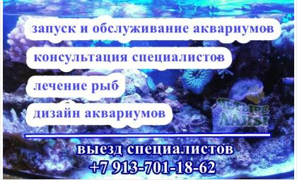 """Компания """"Четыре лапы"""" предлагает свои услуги по аквариумистике"""
