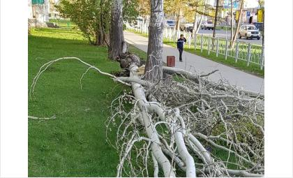 Во время шторма рухнул огромный тополь на ул. Лунной в Бердске