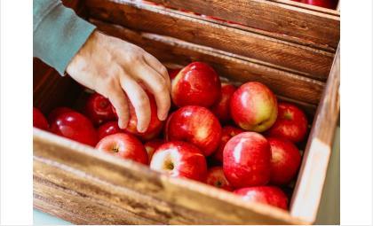 Пожилым людям в Новосибирской области помогут продуктовыми наборами