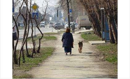 Выгуливать домашних животных можно в период самоизоляции