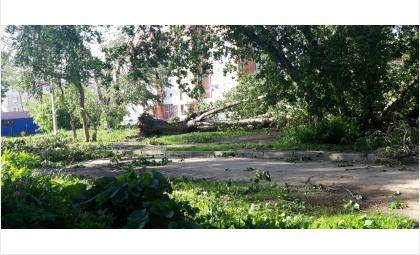 Ураган повалил много деревьев