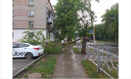 Дерево сломалось во время урагана на ул. Кирова в Бердске