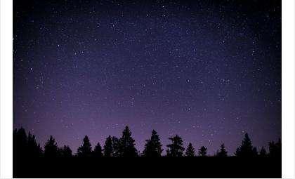 Путники плутали в ночном лесу