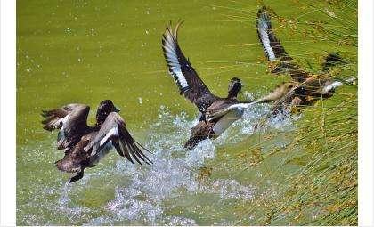 Разрешается охота на птицу