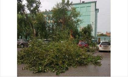 Порывом ветра во время дождя в Бердске сразу на две машины повалило тополь