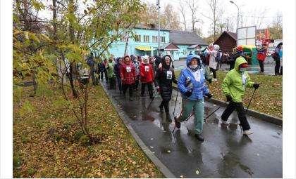 Северная ходьба – развивающаяся новая полезная спортивная дисциплина