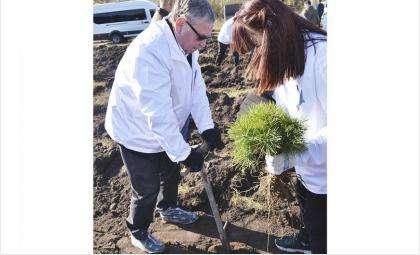 По данным на 9 ноября на площади в 6104 га искусственно возобновлены лесные массивы