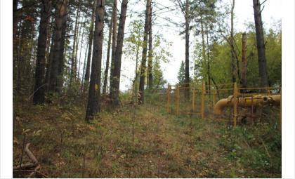 Деревья в охранной зоне придётся пустить под топор