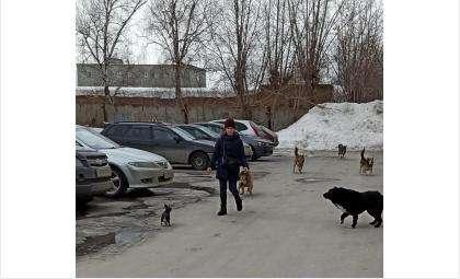На фото весна. Но зимой эта стая собак не менее агрессивна к людям